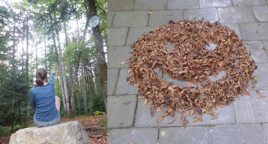 Bijzondere beuk en herfstbladeren